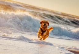 Urlaub mit Hund buchen